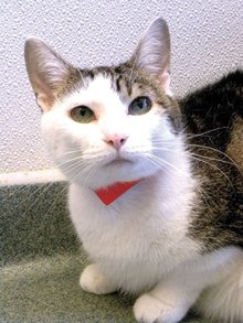 Pet-for-adoption-Lady-