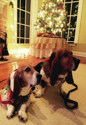 Photos: Pets at the holidays