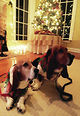 Photos-Pets-at-the-holidays