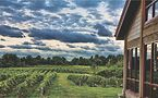 Tabor Hill vineyards. Photo by Christina Allis