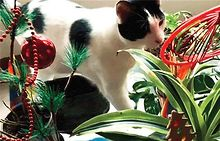 HAPPY-HOLIDAYS-from-Windy-City-Times-and-your-furry-friends