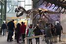 Witte Museum's Naylor Dinosaur Gallery. PR photo from Visit San Antonio